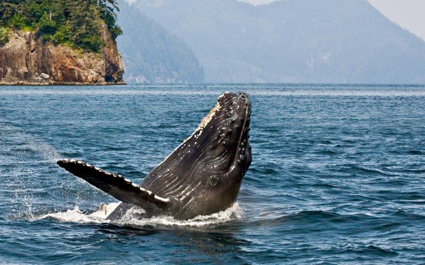 Scan for humpback whales from deck.