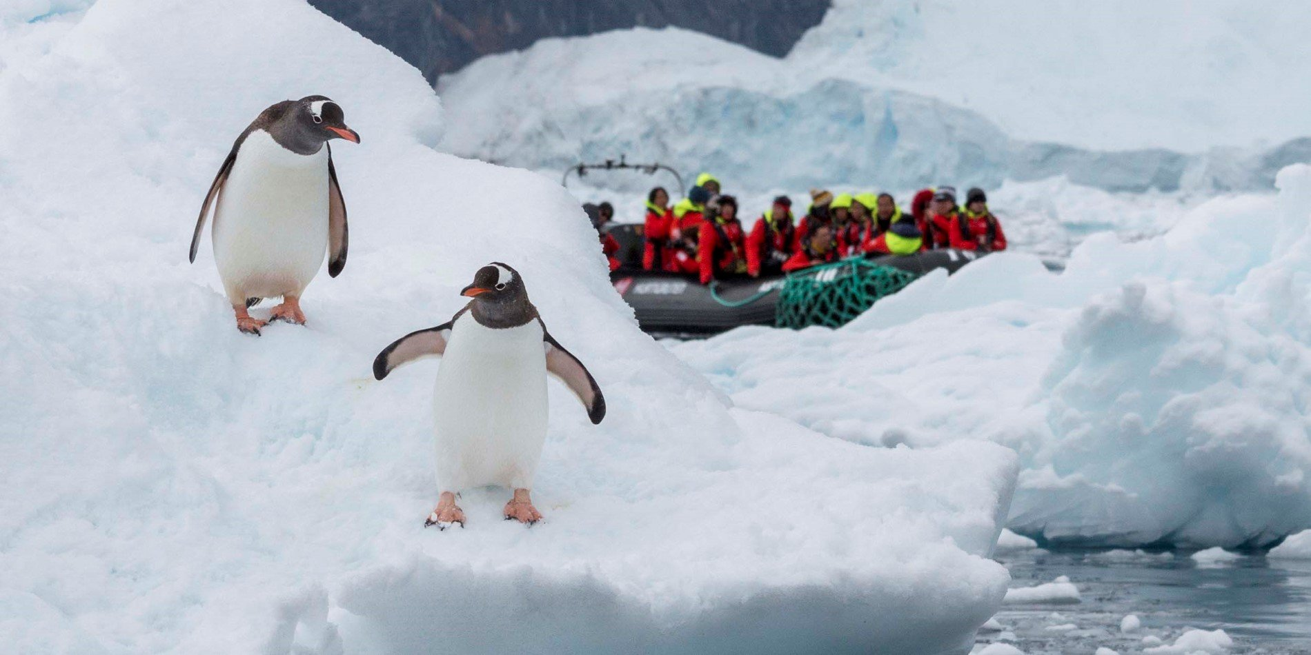 Excursion to meet penguins in Neko Harbour.