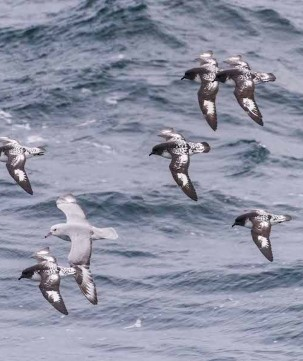 Birds in the Drake Passage