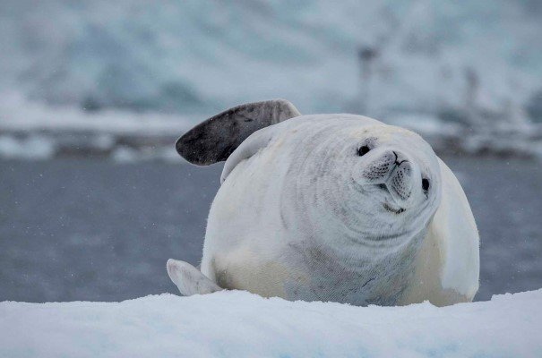 Enjoy landings to see thousands of animals: seals, penguins, birds and whales