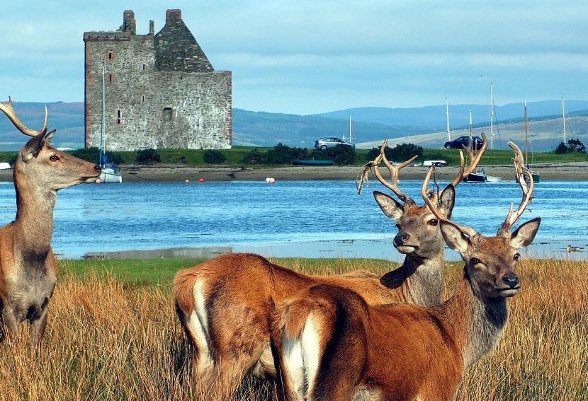 Wildlife and history on the Isle of Arran.