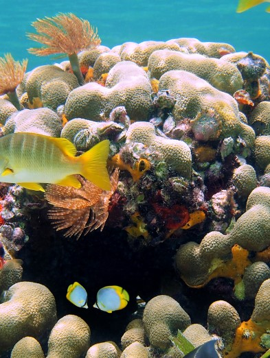 Experience vibrant marine life at local coral reefs.