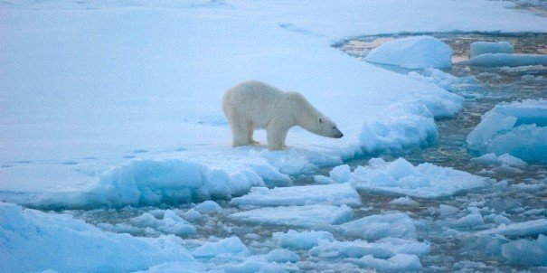 Polar-bear on an ice flake, Beaufort Sea