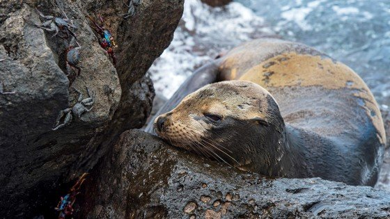 Encounter fantastic wildlife in the Galápagos Islands.