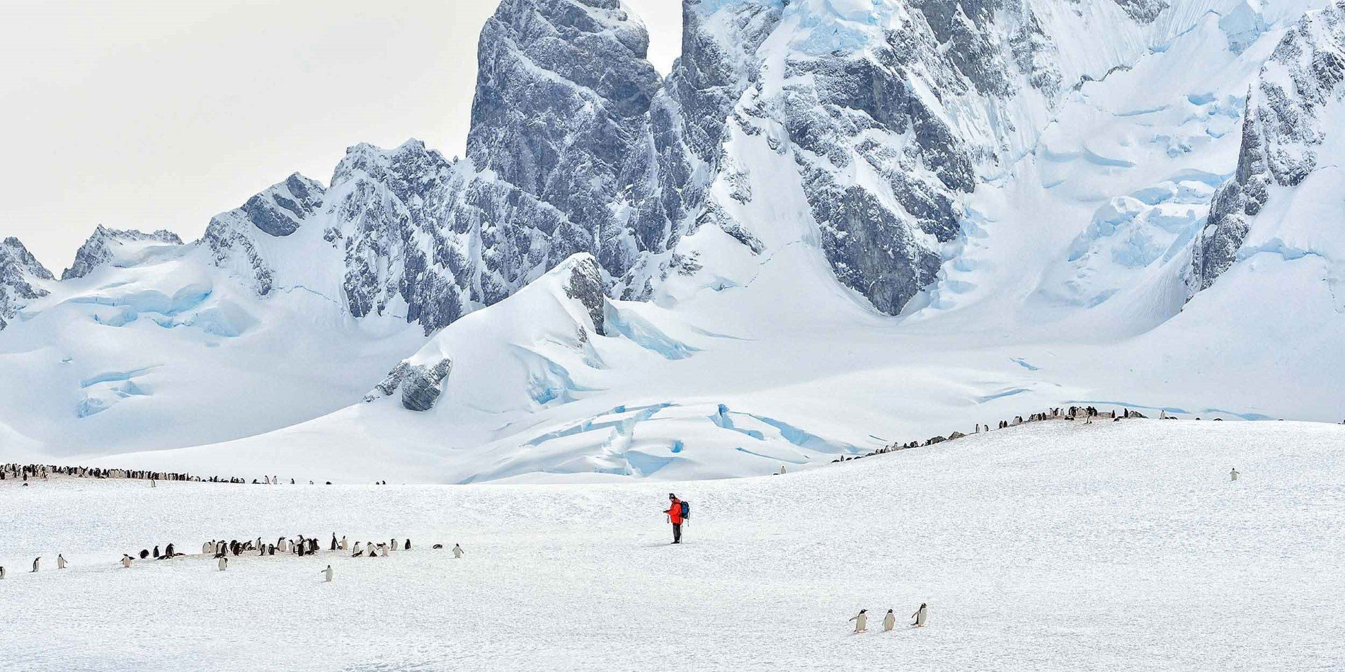 Traveller in the middle of penguins
