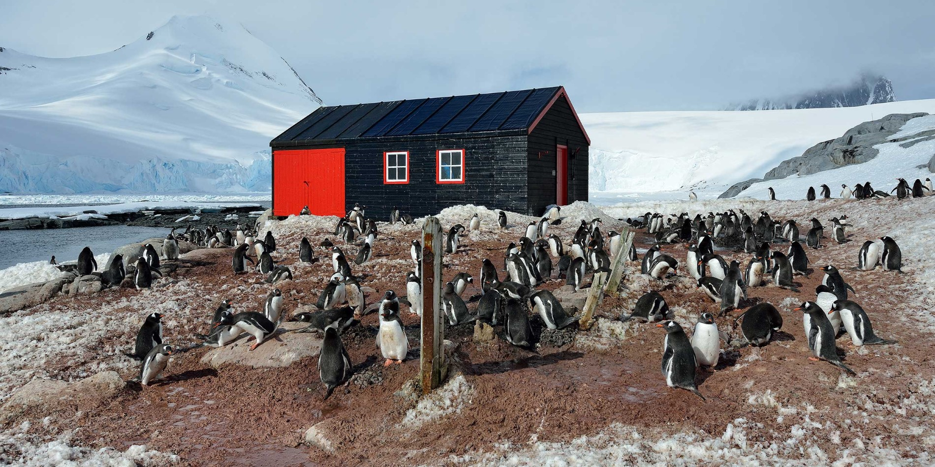Landscape and penguins in Port Lockroy Antarctica