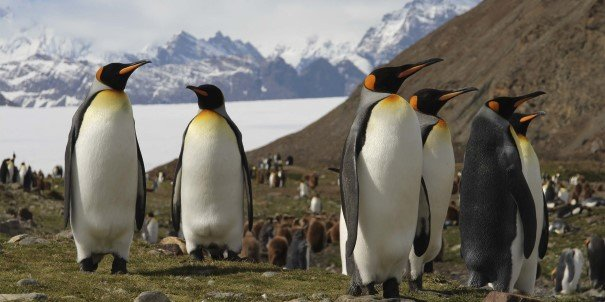Experience the overwhelming power of nature and teeming wildlife, like the majestic King penguins in Fortuna Bay, South Georgia.