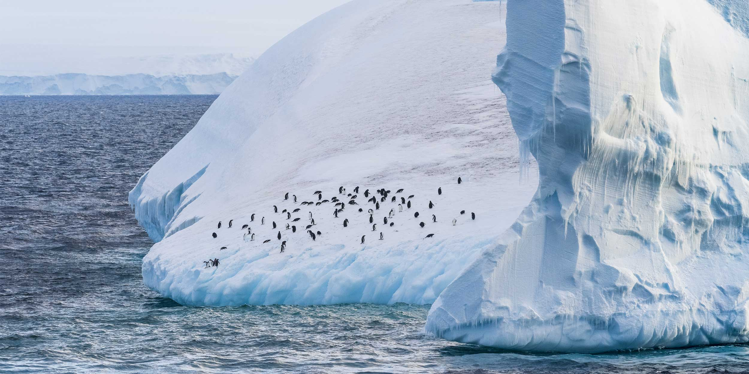 Antarctica Cruises Explore The Last Untouched Continent - 12 things to see and do in antarctica