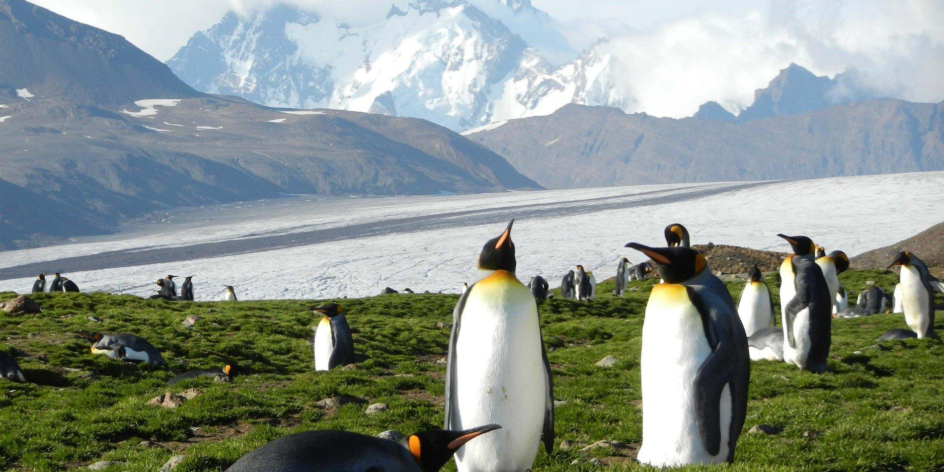 Antarktis Vegetation
