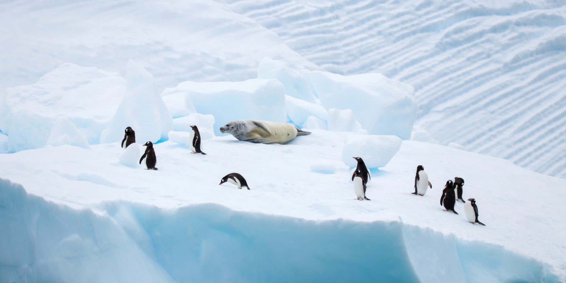 Penguins and seal seen floating on ice in Neko Harbour
