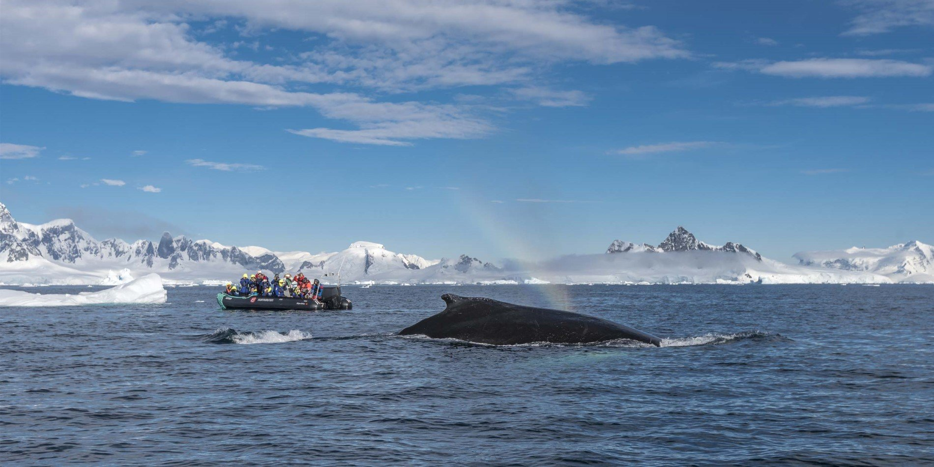 Humpback whales giving us a show in Wilhelmina Bay, Antarctica