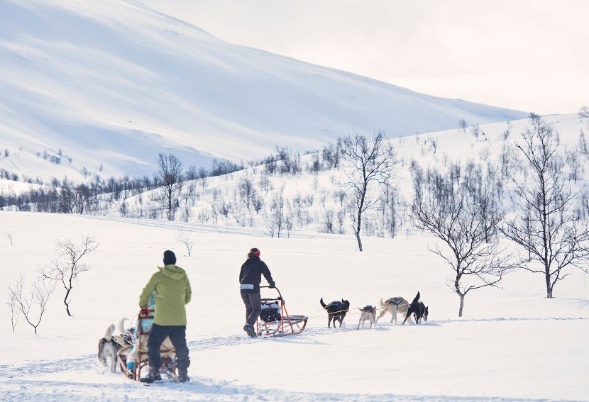 Go dog sledding in northern Norway