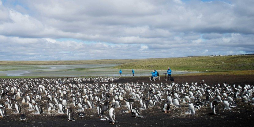 Visit the penguins at Bluff Cove on the Falkland Islands