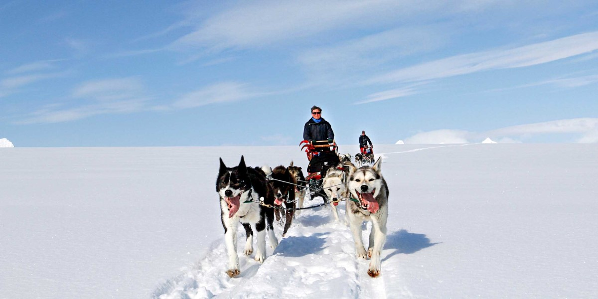 spitsbergen excursions summer dog sledding in longyearbyen