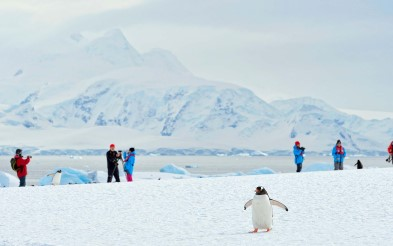 Passengers and penguins in Antarctica