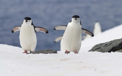 Enjoy meeting penguins in Antarctica