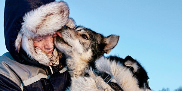 On our dog-sled adventures, huskies eagerly transport you across the frozen Arctic landscape.