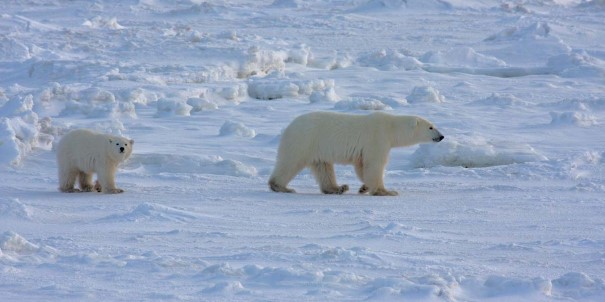 Be on the lookout for polar bears at Conningham Bay.