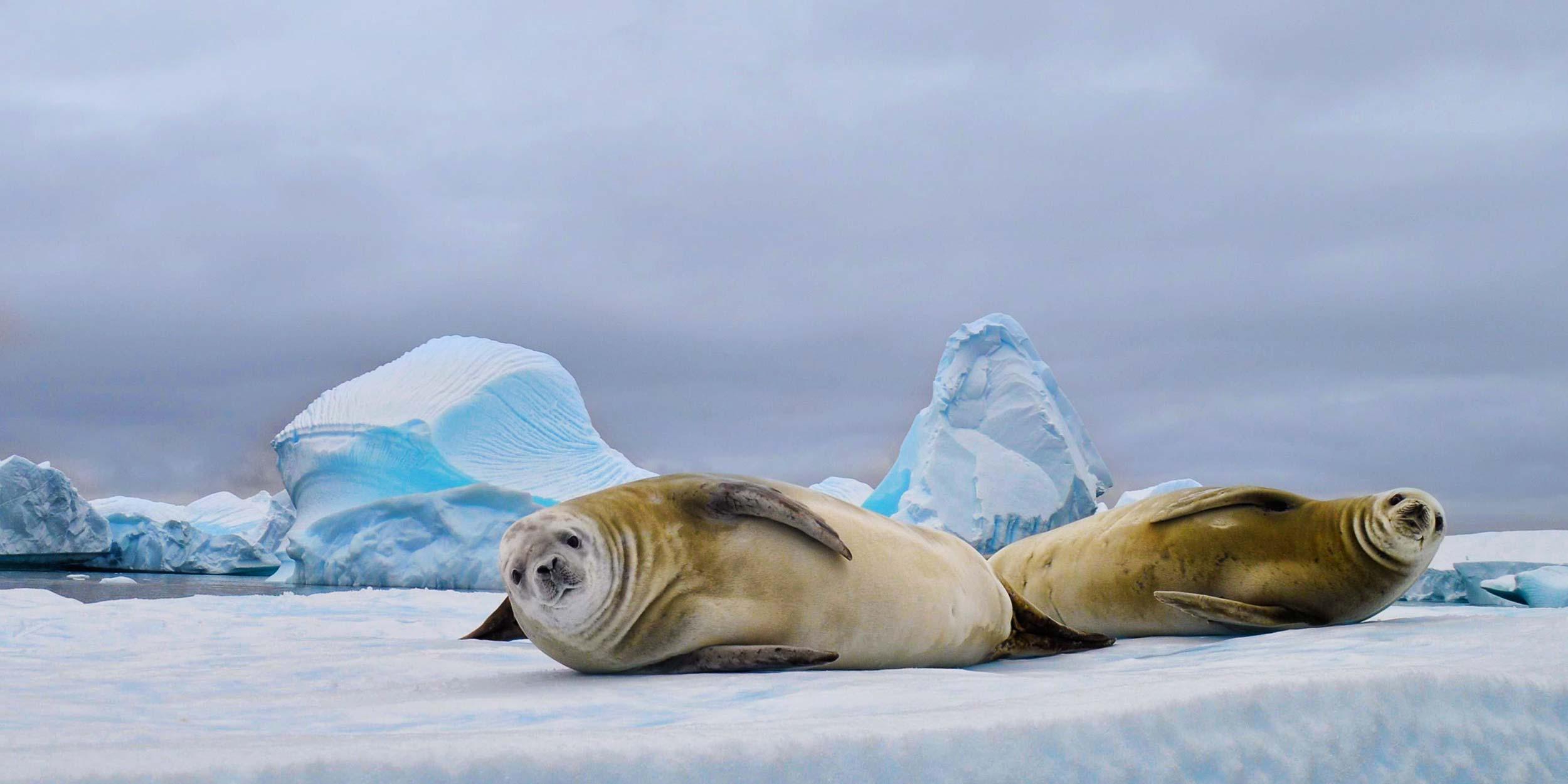 albatross antarctica